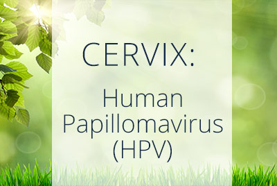 Cervix, Human Papillomavirus, HPV, Menopause Center Los Angeles