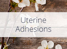 Uterine Adhesions & Scaring
