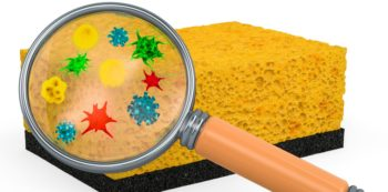 Germs in House Sponge