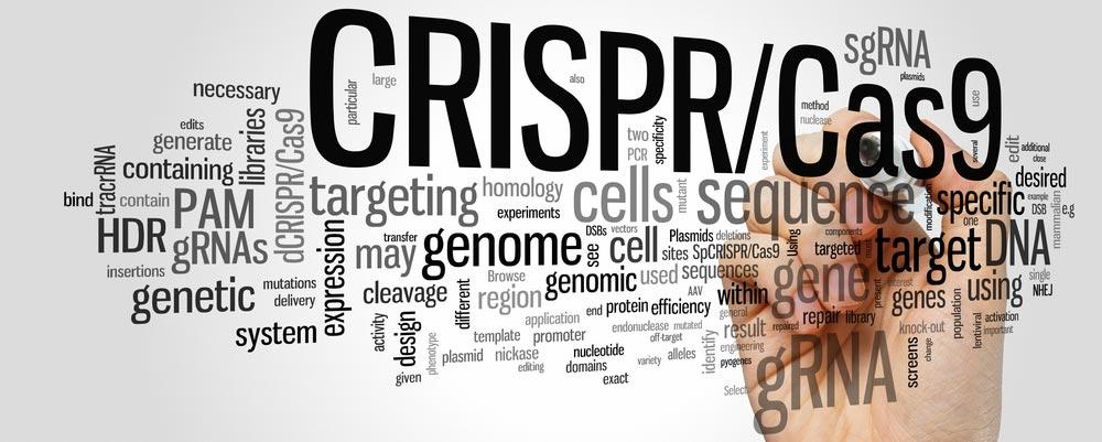 CRISPR next antibiotic