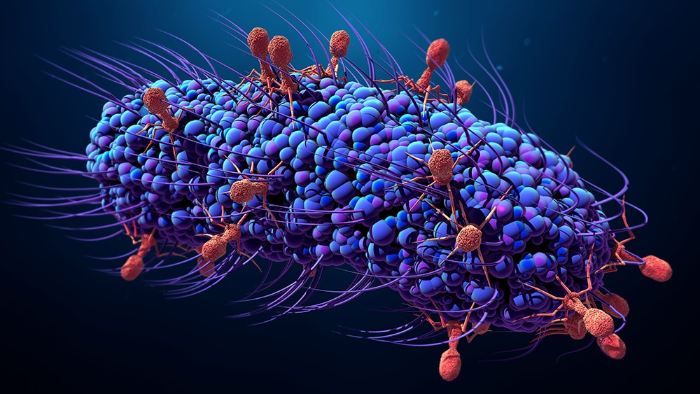 Bacteriophage therapy utilizing viruses to stop bacteria